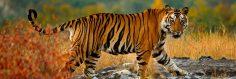 Incredible India: India National Bird and Animal