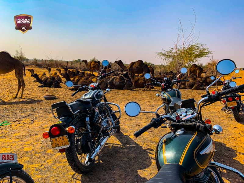 Camel and motorbike